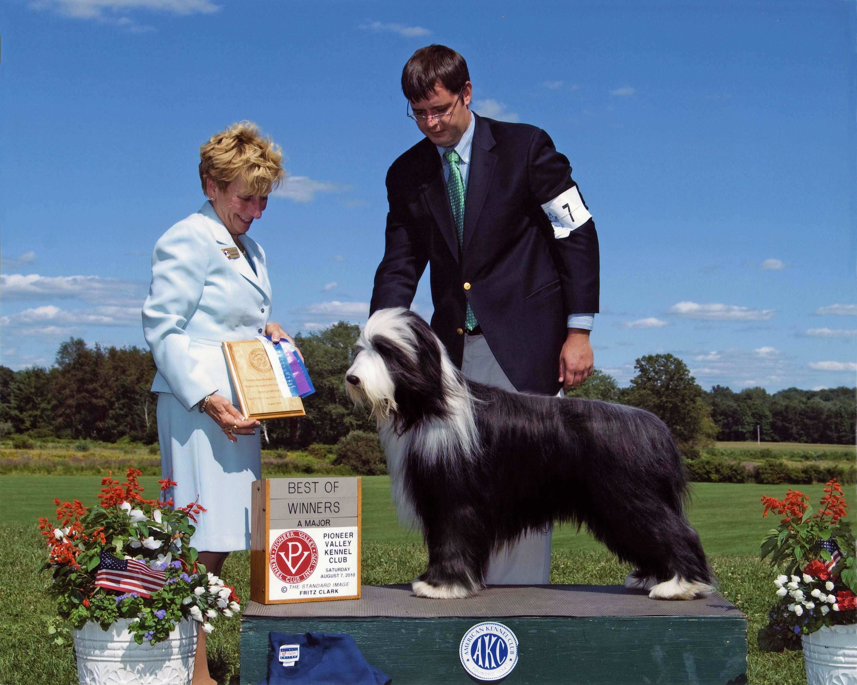 Bramley's Green Mountain Boy Bearded Collie Brae